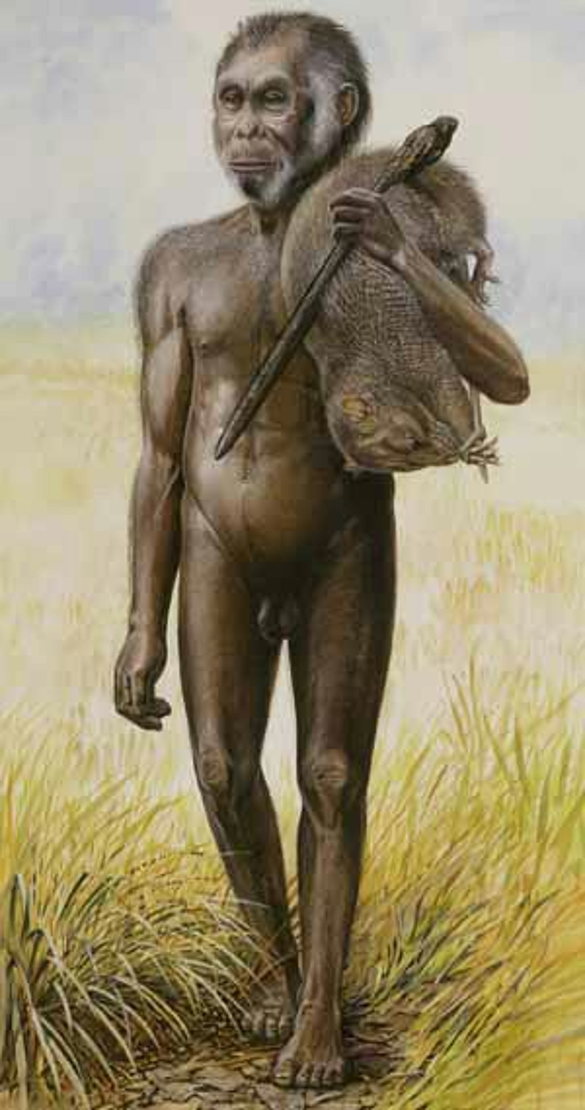 An artist's impression released by the University of Wollongong, south of Sydney, of Homo floresiensis on the Indonesian island of Flores in 2004.