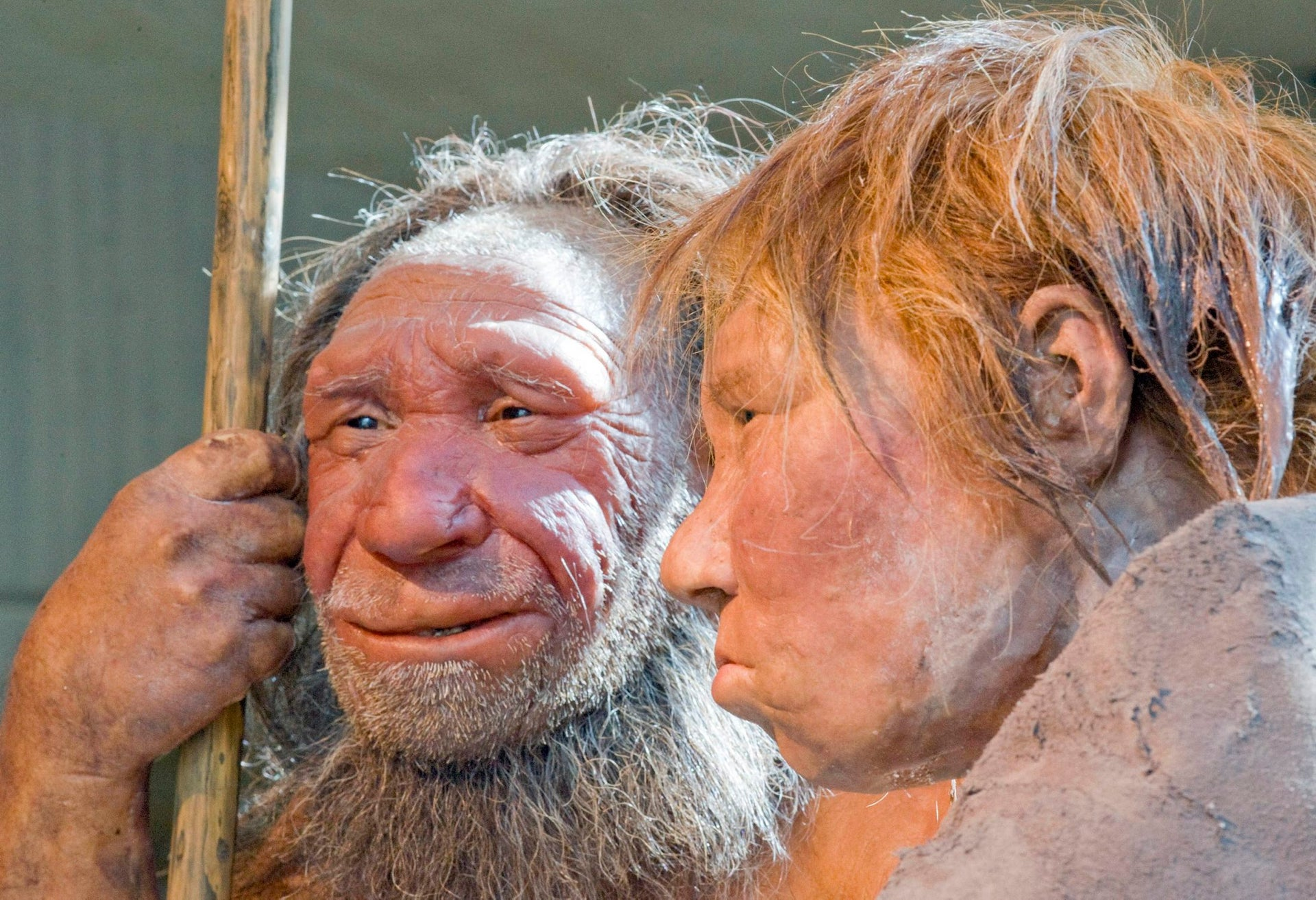 """Reconstructions of a Neanderthal man named """"N,"""" left, and woman called """"Wilma,"""" at the Neanderthal museum in Mettmann, Germany, 2009. Mixing with Neanderthals may have weakened us genetically."""