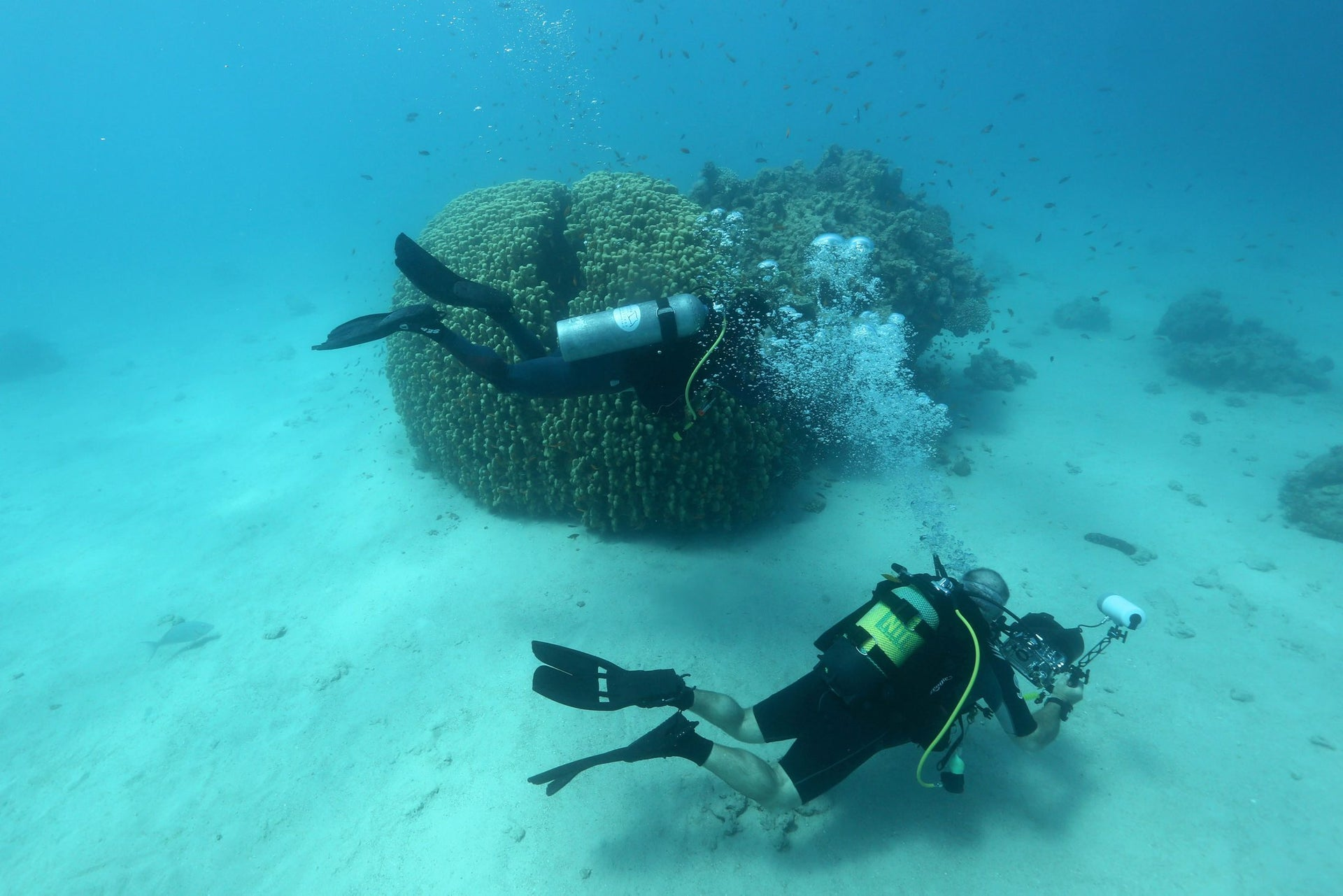 Scuba divers check coral reefs in the Red Sea off the southern Israeli resort city of Eilat on June 12, 2017.