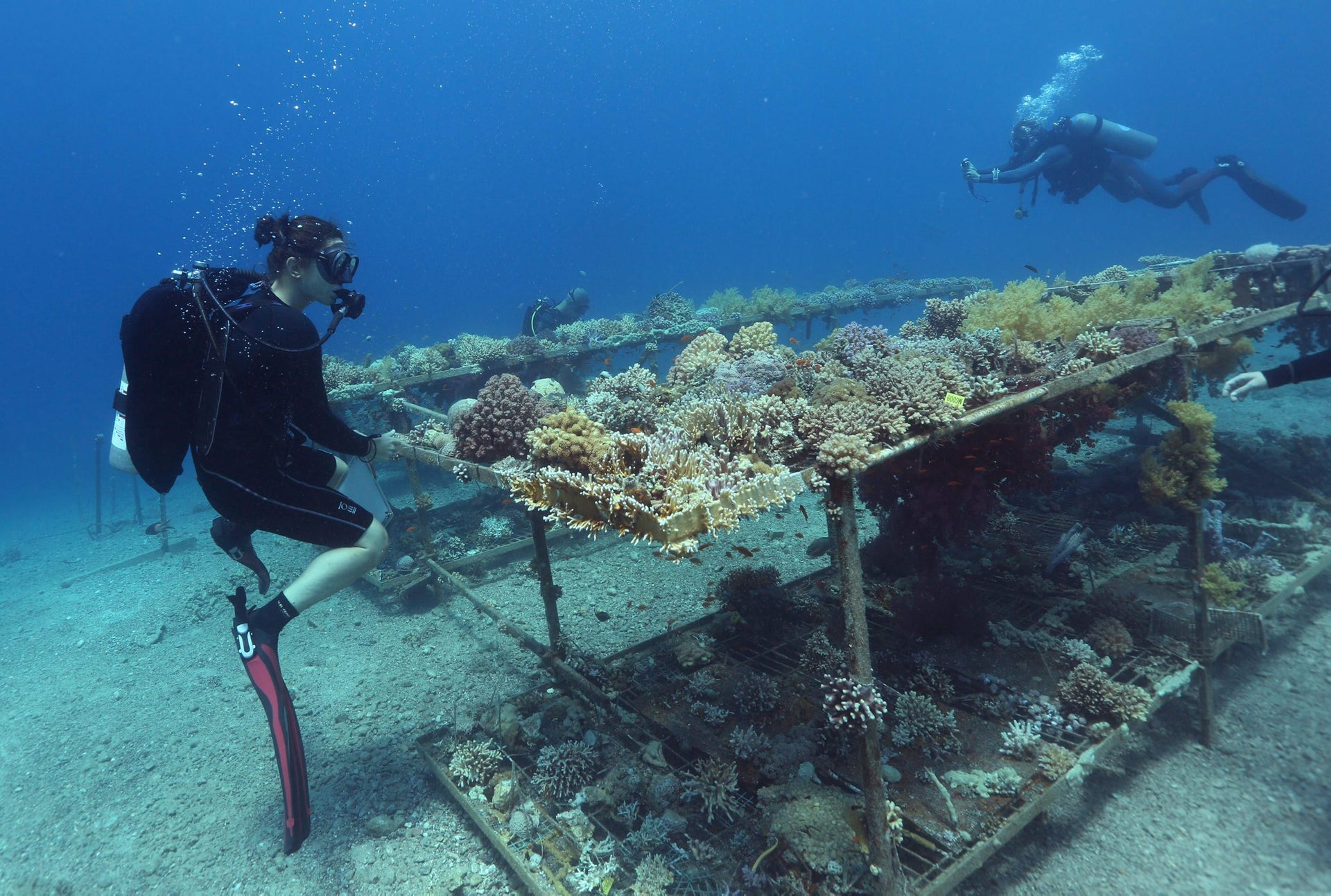 Researchers from the Interuniversity Institute for Marine Sciences in the southern Israeli resort city Eilat monitor coral growth while scuba diving on June 12, 2017 in the Red Sea off Eilat.