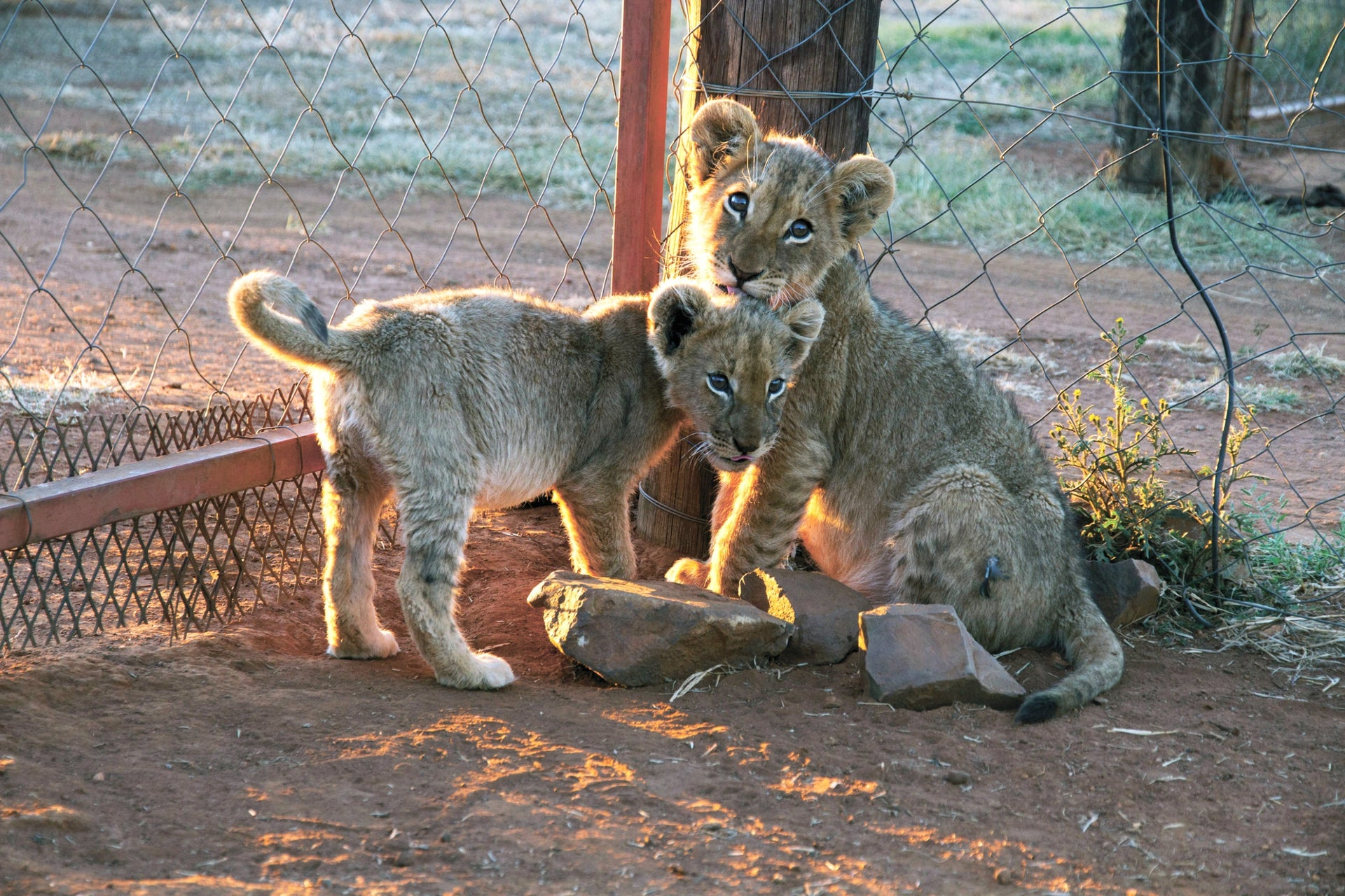 From 'Blood Lions.'