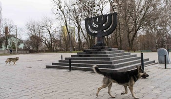 Stray dogs roam the Babi Yar monument on March 14, 2016 in Kiev, where Nazis and local collaborators murdered 30,000 Jews in 1941.