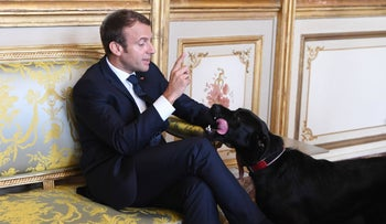 French president Emmanuel Macron gestures towards his dog Nemo during a meeting with German Vice Chancellor and German Foreign Minister at the Elysee presidential Palace in Paris on August 30, 2017.