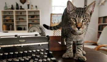 FILE PHOTO: A six-toed cat descended from a tomcat named Snow White that the acclaimed American author Ernest Hemingway adopted while he lived in Key West, Florida, U.S.