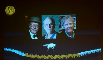 Winners of the 2017 Nobel Prize in Physiology or Medicine, from left to right: Jeffrey C. Hall, Michael Rosbash and Michael W. Young, October 2, 2017.