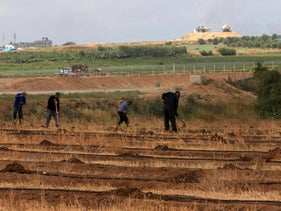 Palestinian agricultural workers on kibbutz Erez in south-western Israel on August 3, 2017.
