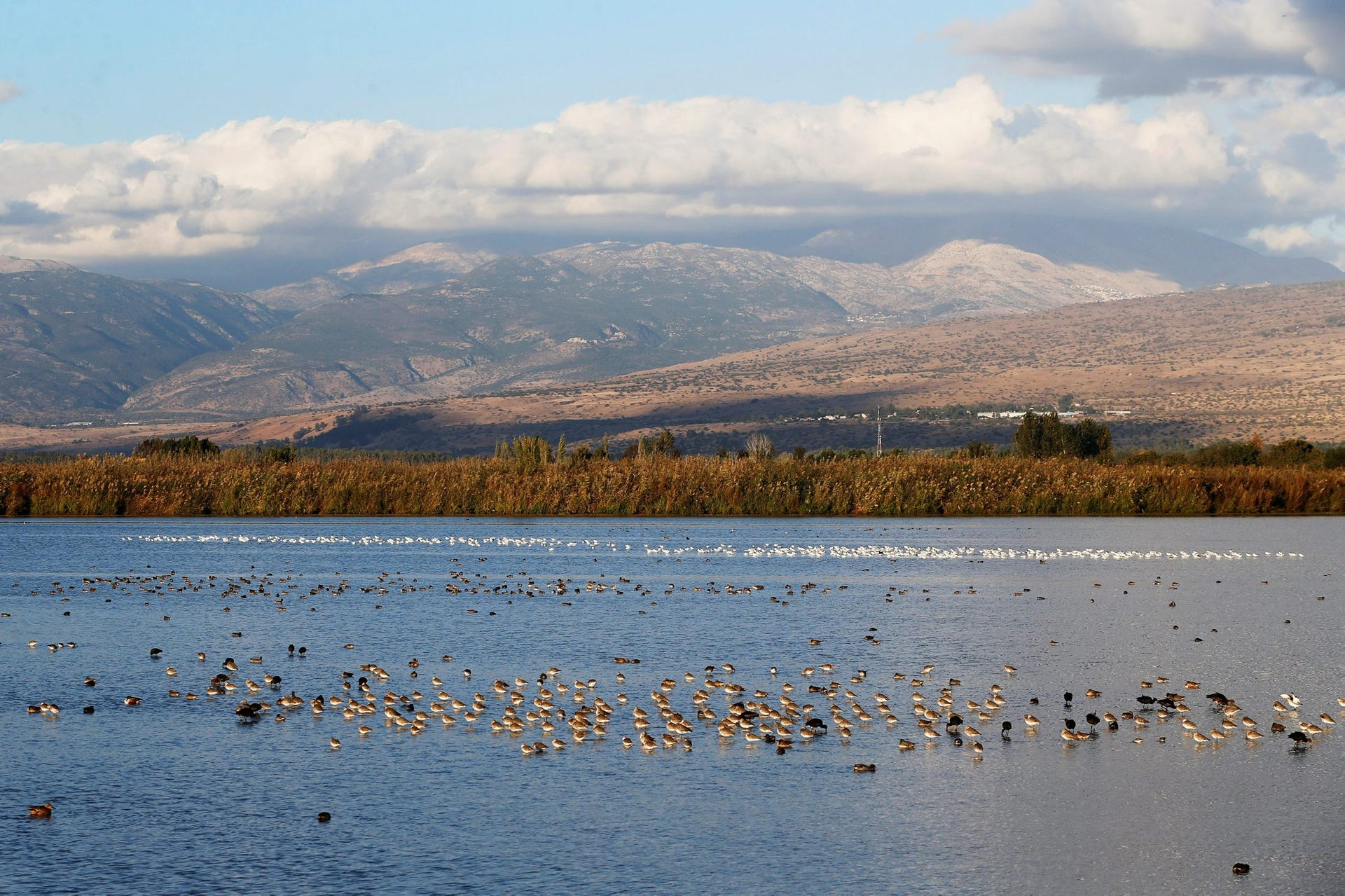 Birds rest at the Hula Nature Park in northern Israel November 22, 2017.