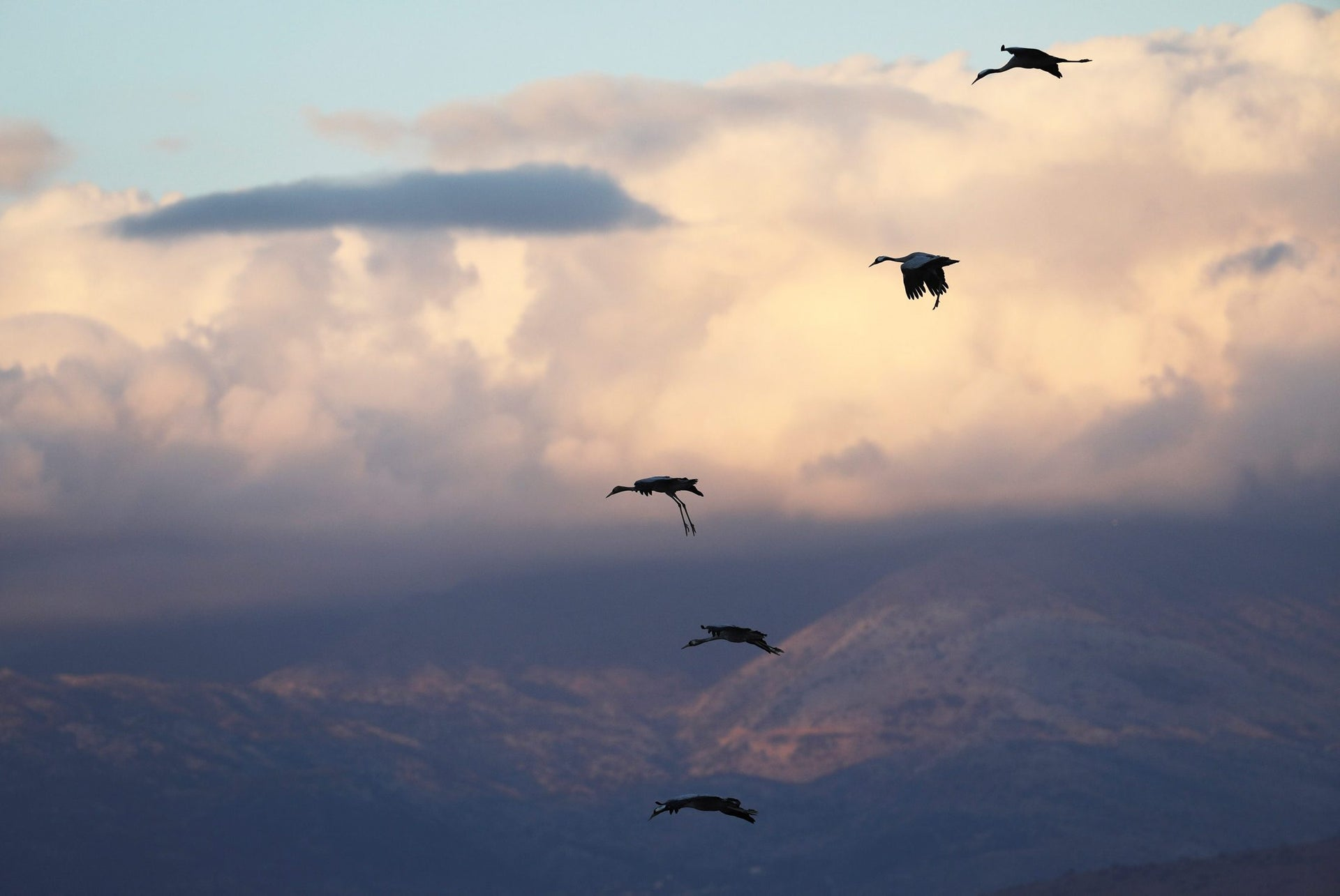 Migrating cranes fly over the Hula Nature Park in northern Israel November 22, 2017