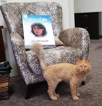 A photo of Khalida Jarrar on a chair at her Ramallah home, next to her cat, Ajawi.