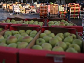 Apples at the wholesale market in Tzifrin, Israel, 2016.