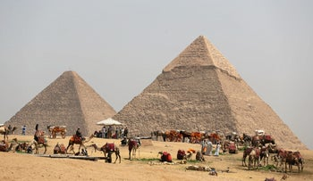 A group of camels and horses stand idle in front of the Great Pyramids awaiting tourists in Giza, Egypt, March 29, 2017.
