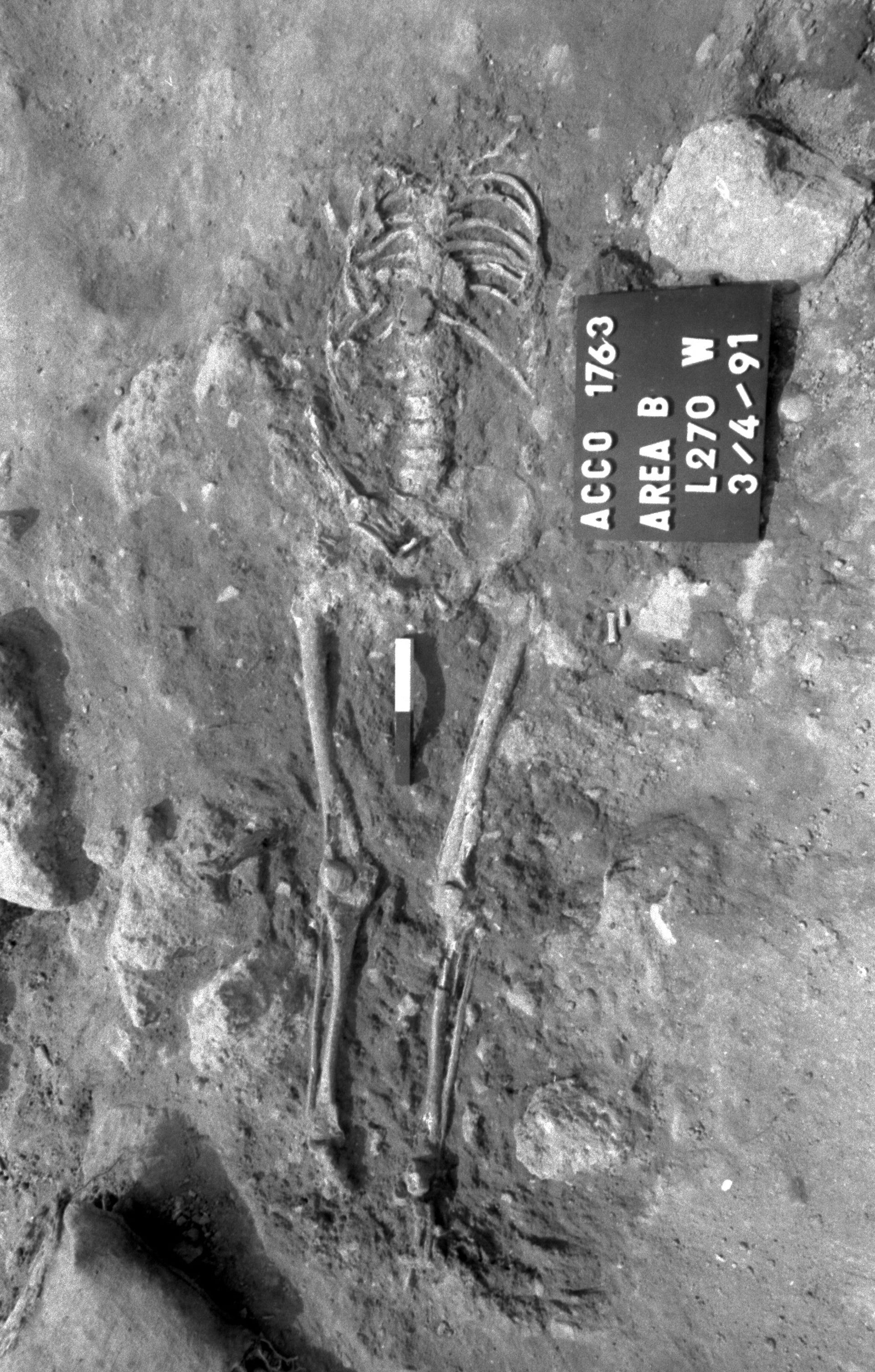 The body of a French soldier in Napoleon's invasion force, decapitated by Turkish forces in 1799, in Acre, Israel.