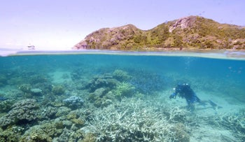 Coral bleaching at Lizard Island off the Australian state of Queensland.