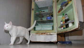 A cat is seen next to a refrigerator at a home in Tel Aviv.