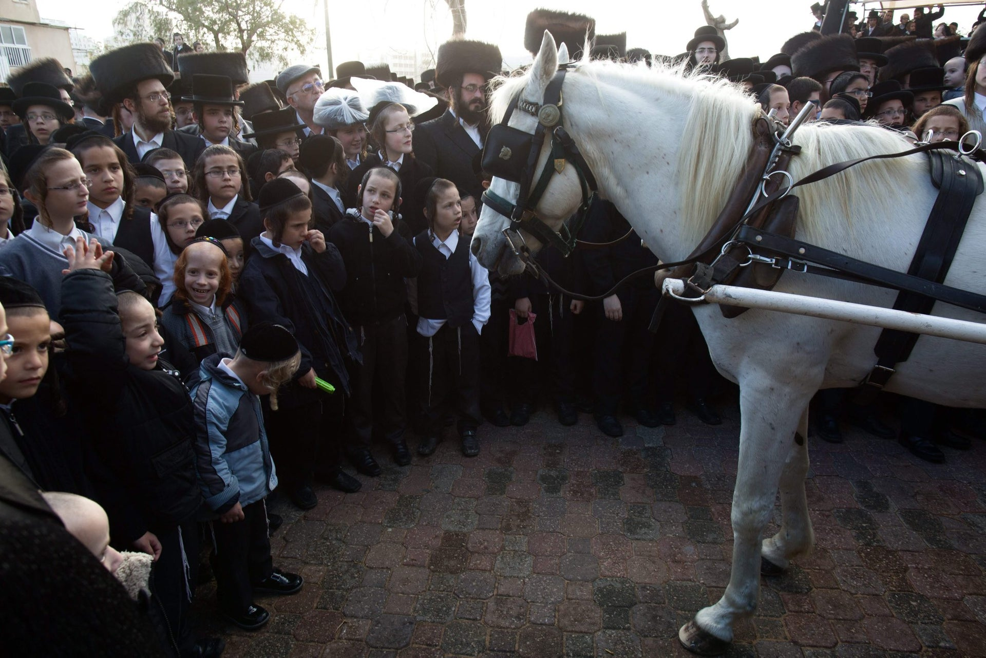 Ultra-Orthodox Jewish children stand next to a horse-drawn carriage carrying Natan Meir Neta Hilbershtam, the groom from the Tzanz Hasidic dynasty, before his wedding with Parowol Mirel Lamber from the Toldos Avrohon Yitzchok Hasidic dynasty, on March 15, 2016, in the Israeli central city of Netanya.