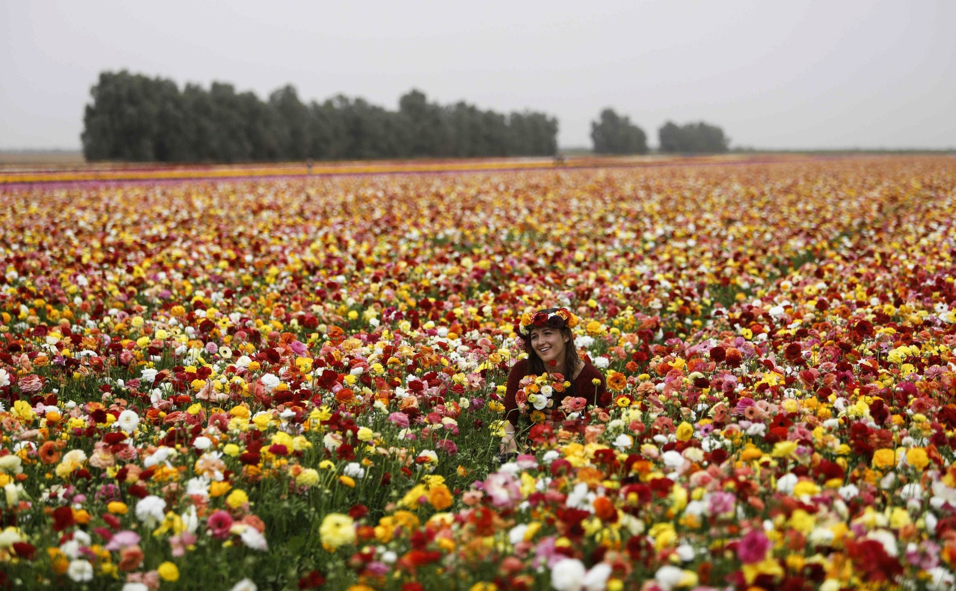 An Israeli woman sits in a field of Ranunculus flowers wearing a laurel upon her head, in the southern Israeli Kibbutz of Nir Yitzhak, located along the Israeli-Gaza Strip border, during the Jewish holiday of Pesach (Passover) on April 12, 2017.