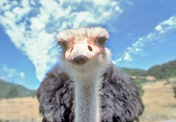 There were bear markets and bull markets. Now we have an ostrich market.