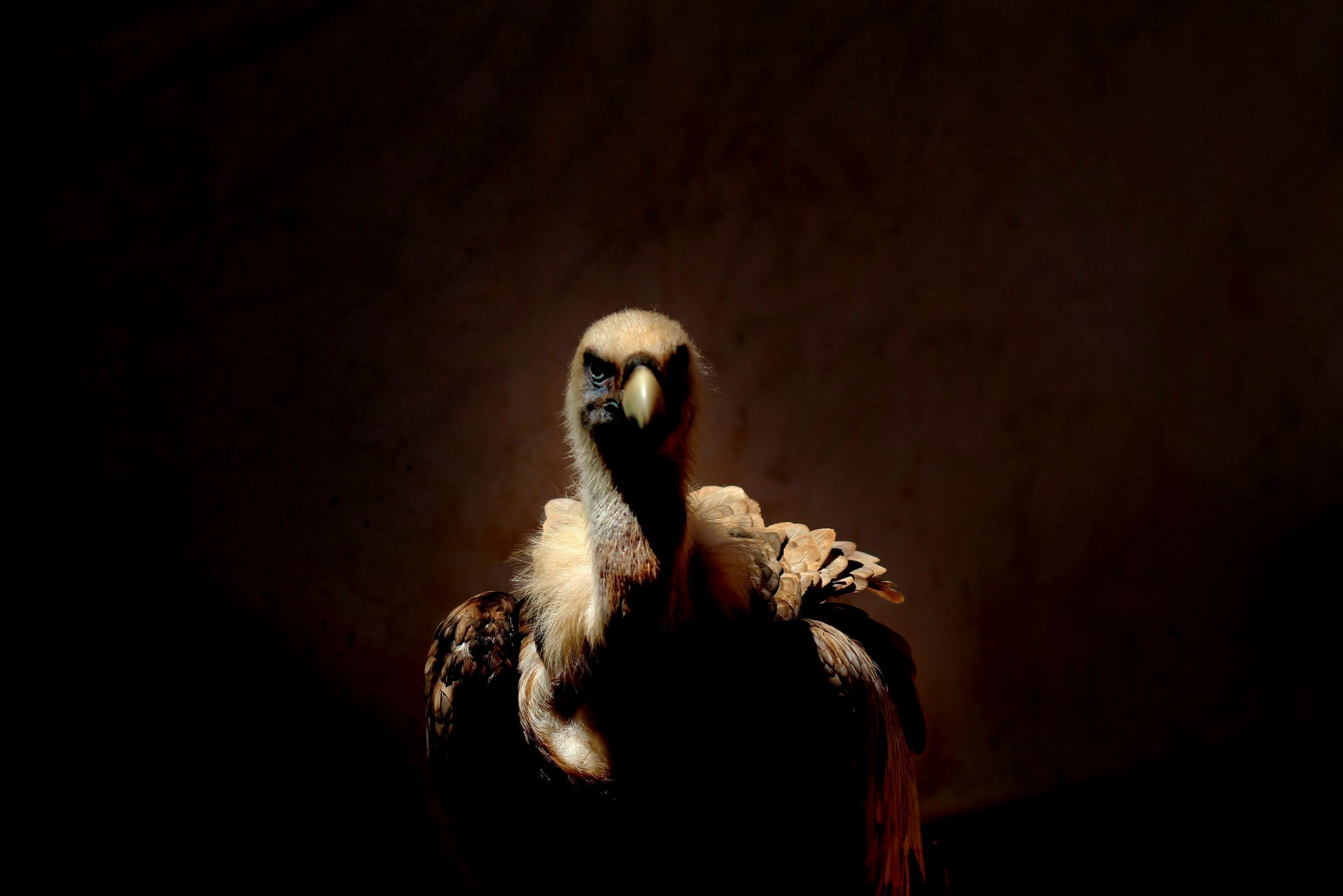 A Griffon vulture recuperates at the Wild Animal Hospital run by the Nature and Parks Authority, September 2014 (First Prize in Wild Animals in Controlled Conditions category).