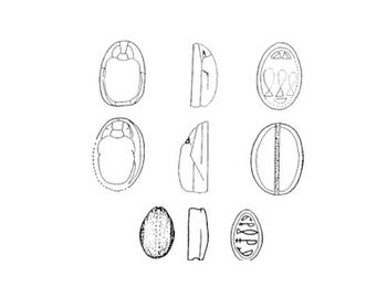 Drawings of some of the scarabs found at Tell el-Ajjul.
