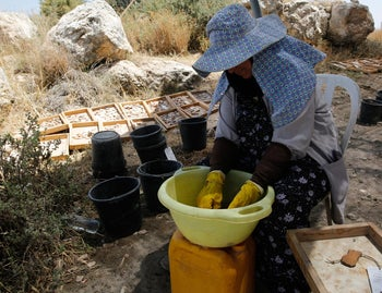 A worker washes ancient artifacts discovered in Modiin prior to the construction of a new neighborhood, June 7, 2016.