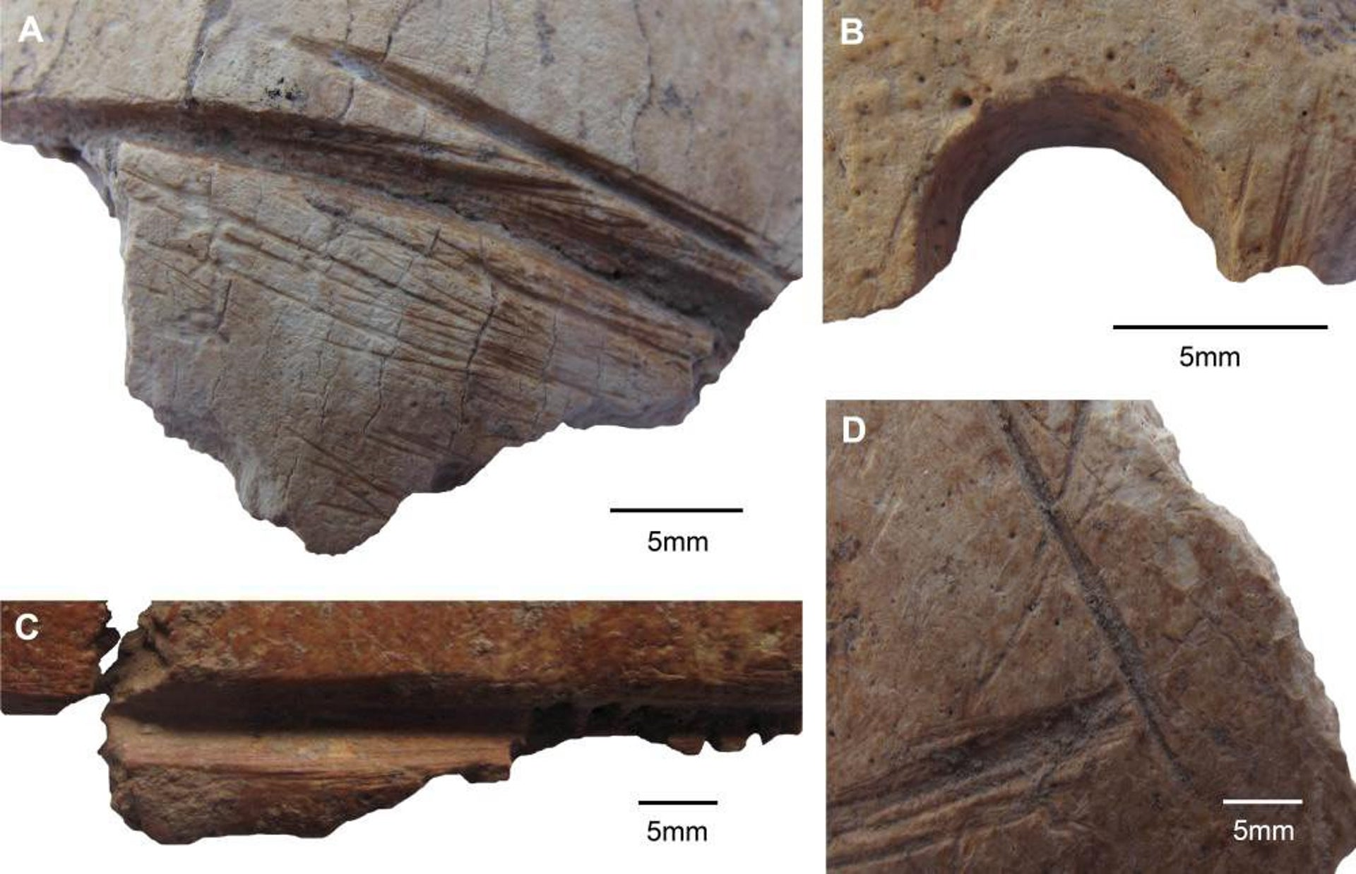 Macroscopic details of artificial skull modifications. A, C, D: carvings, B: drilled perforation.