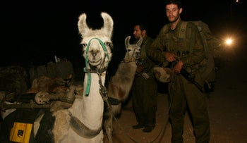 IDF soldiers with llamas carrying equipment during the Second Lebanon War in June 2006.