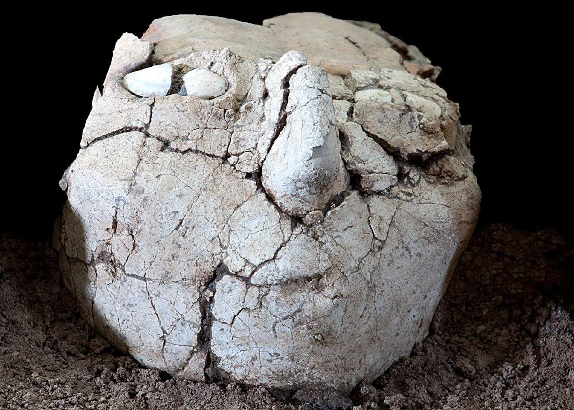 One of the plastered skulls found in the Neolithic site of Yiftahel in the Galilee and dating to 9,000-8,500 years ago. Making the skulls, with seashells for eyes, would have involved enormous effort: Archaeologists now think they were connected to ancestor worship in the transition from hunting-gathering to settlement, that would support the rise of civilization as we know it.
