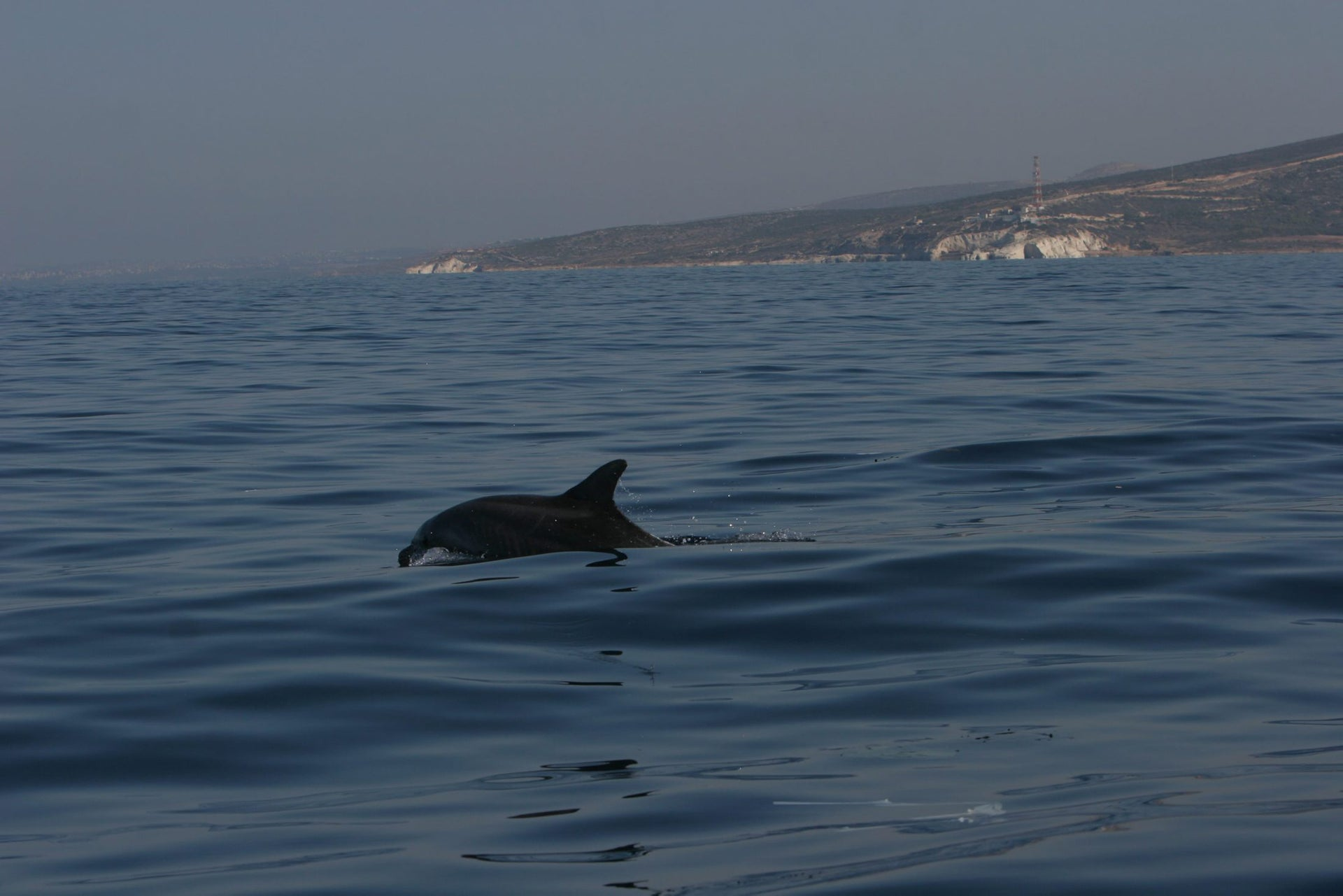 A dolphin in the Rosh Hanikra Marine Reserve.