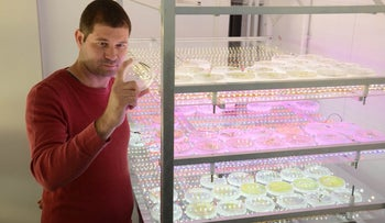 Assistant Prof. Iftach Yacoby, head of the renewable energy laboratory at Tel Aviv University, wearing brick-red shirt, short full head of hair. He is standing to the right of shelves bearing petri dishes, in which something, presumably algae, is being cultivated.