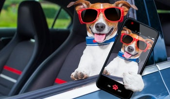 A car with no driver and only a dog, brown and white and wearing red glasses, in the driver's seat. The dog appears to be holding a smartphone showing a selfie of the dog, with the glasses, on its screen.