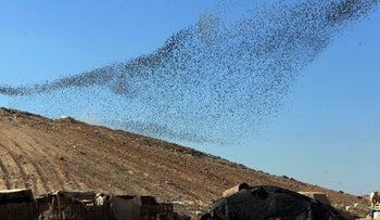 Swarms of locusts flying over a dump in the Negev, in southern Israel, Dec. 26, 2016.