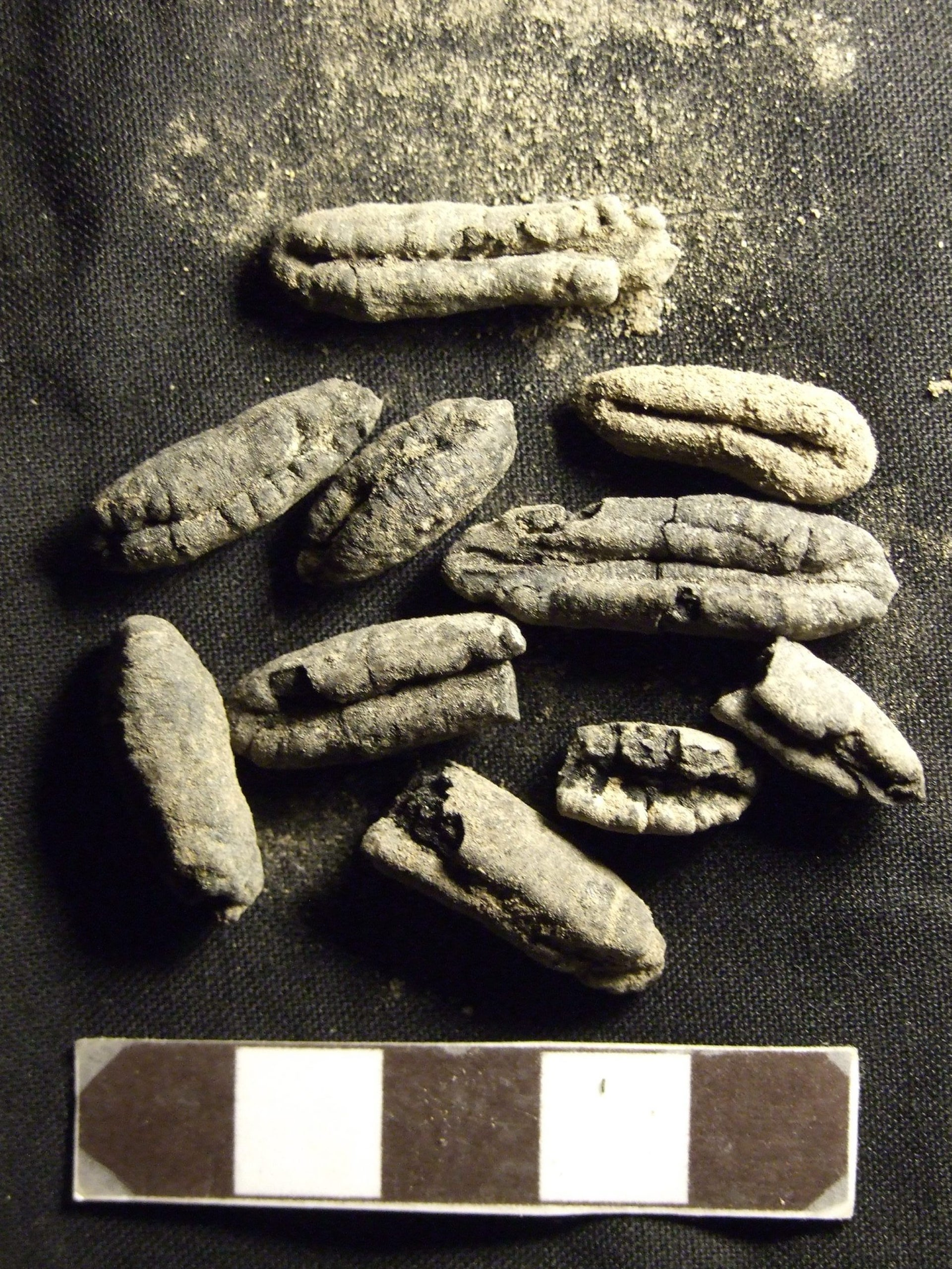Date pits found in ancient Shivta