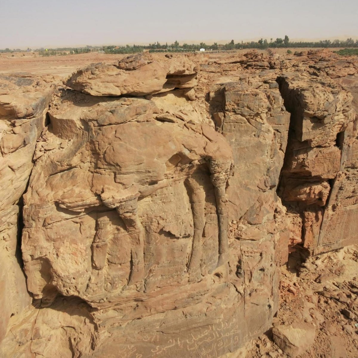 High relief of standing dromedary on sandstone spur at center of image