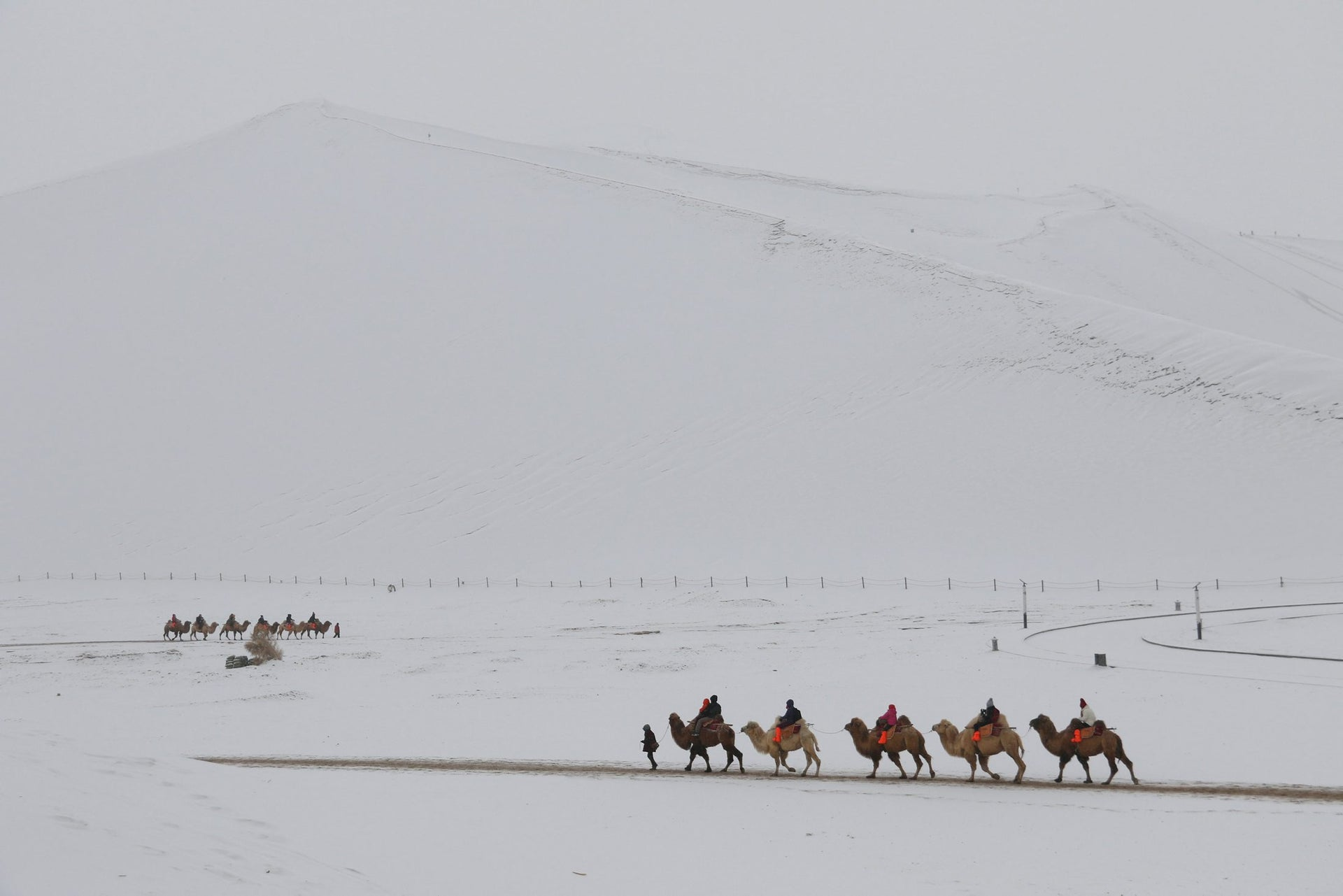 Camels originated about 45 million years ago in North America, whence they spread to South America,  Africa and Asia. The picture shows camels bearing people through snow in the desert at Mingsha Shan in Dunhuang, Gansu province, China