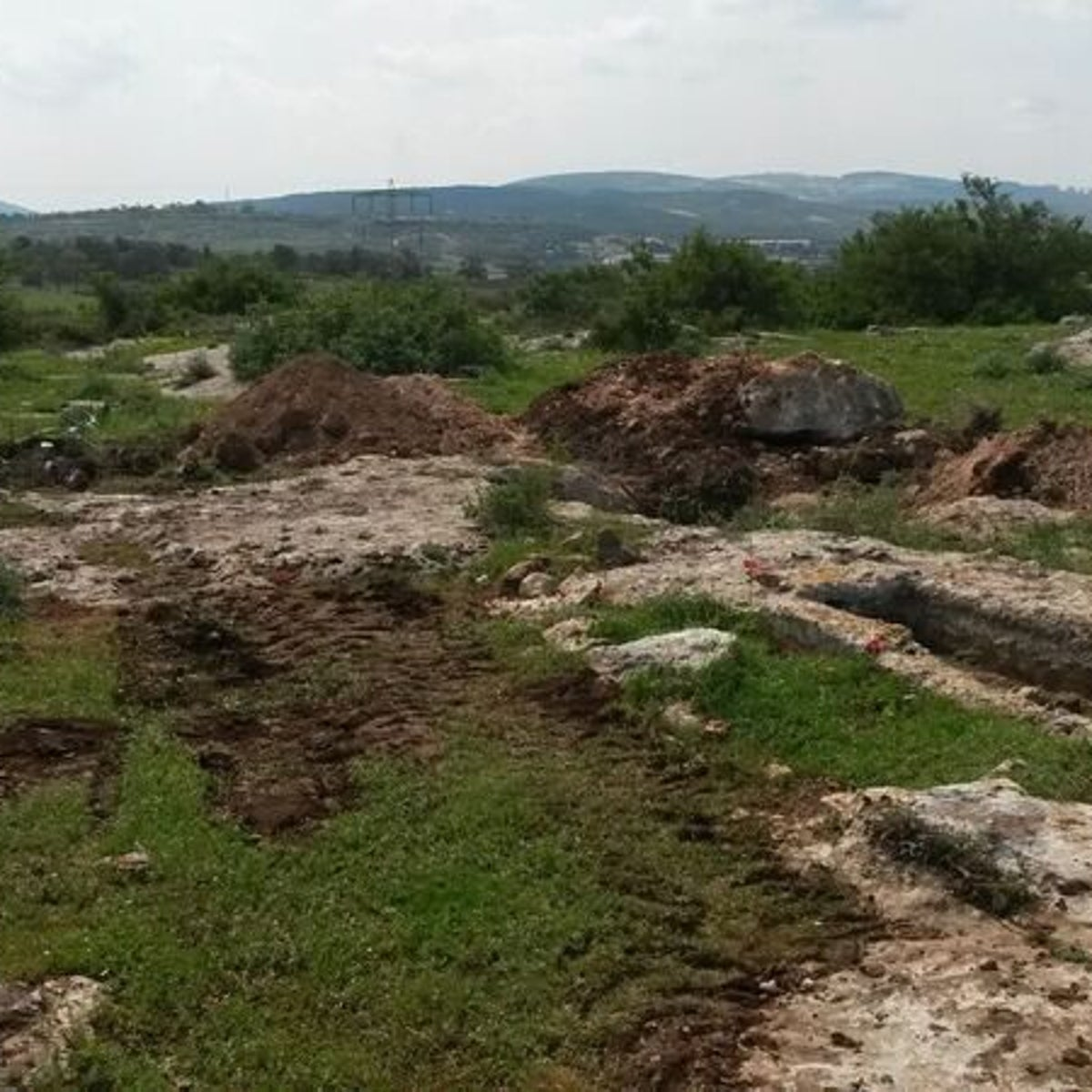 Bulldozer tracks and damage by the Mishkana tombs: We see a lovely green spring field in the Galilee marred by the damage done by tomb robbers