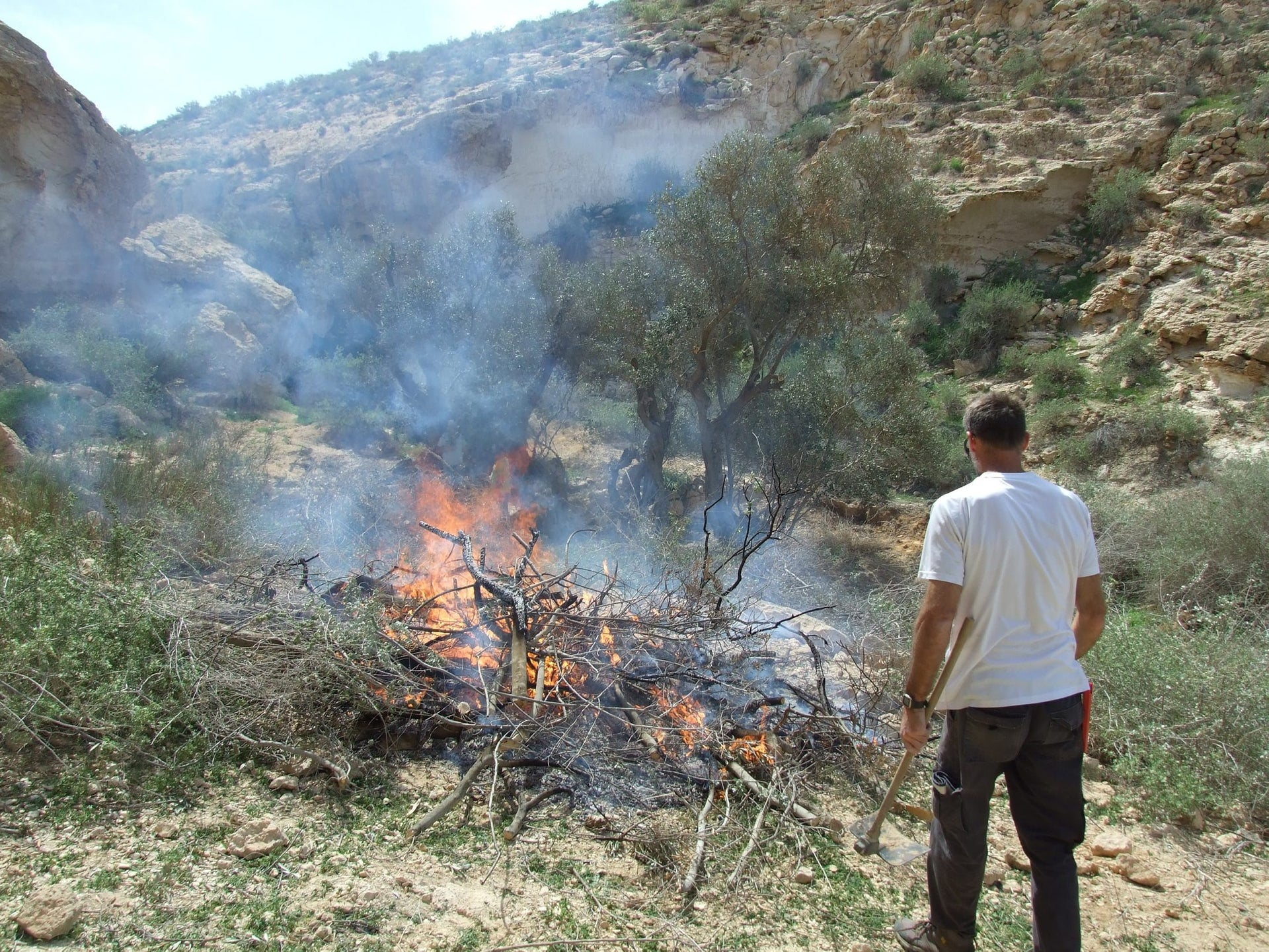 Burning detritus after cropping the Shivta olive trees