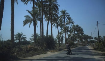 A man rides a motorcycle near date palm trees at a farm in Kerbala, Iraq, October 14, 2017. Picture taken October 14, 2017