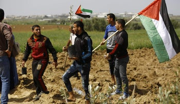 Palestinians in the Gaza Strip plant olive seedlings ahead of the Land Day near the border with Israel, March 20, 2018.