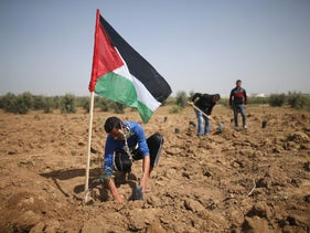 Palestinians plant olive seeds before Land Day near the border between Israel and Gaza on March 20, 2018.