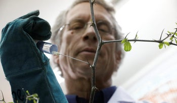 Dr. Shabtai Cohen holds a water syringe to a thorny branch of the Christ's Thorn Jujube tree in his laboratory at the Volcani Agricultural Research Centre in Beit Dagan, Israel, March 8, 2018.