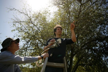 Researchers Yotam Zait (R) and Dr. Shabtai Cohen (L) preform measurements on a Christ's Thorn Jujube tree in Neot Kedumim, Israel, March 14, 2018.