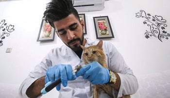 Ahmad Taher, a 24-year-old senior veterinary student, clips the claws of a cat staying for short periods at a cat hotel which he manages in the southern Iraqi city of Basra on March 28, 2018.