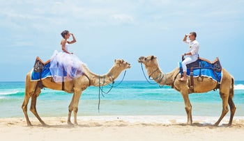 A bride wearing the traditional white dress, sitting on a camel (left) and facing a groom sitting on another camel. the camels wear blue saddles. They are on a beach and behind them is the sea.