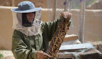 Beekeeper Frozan checks a beehive in the Marmul district of Balkh province, Afghanistan.