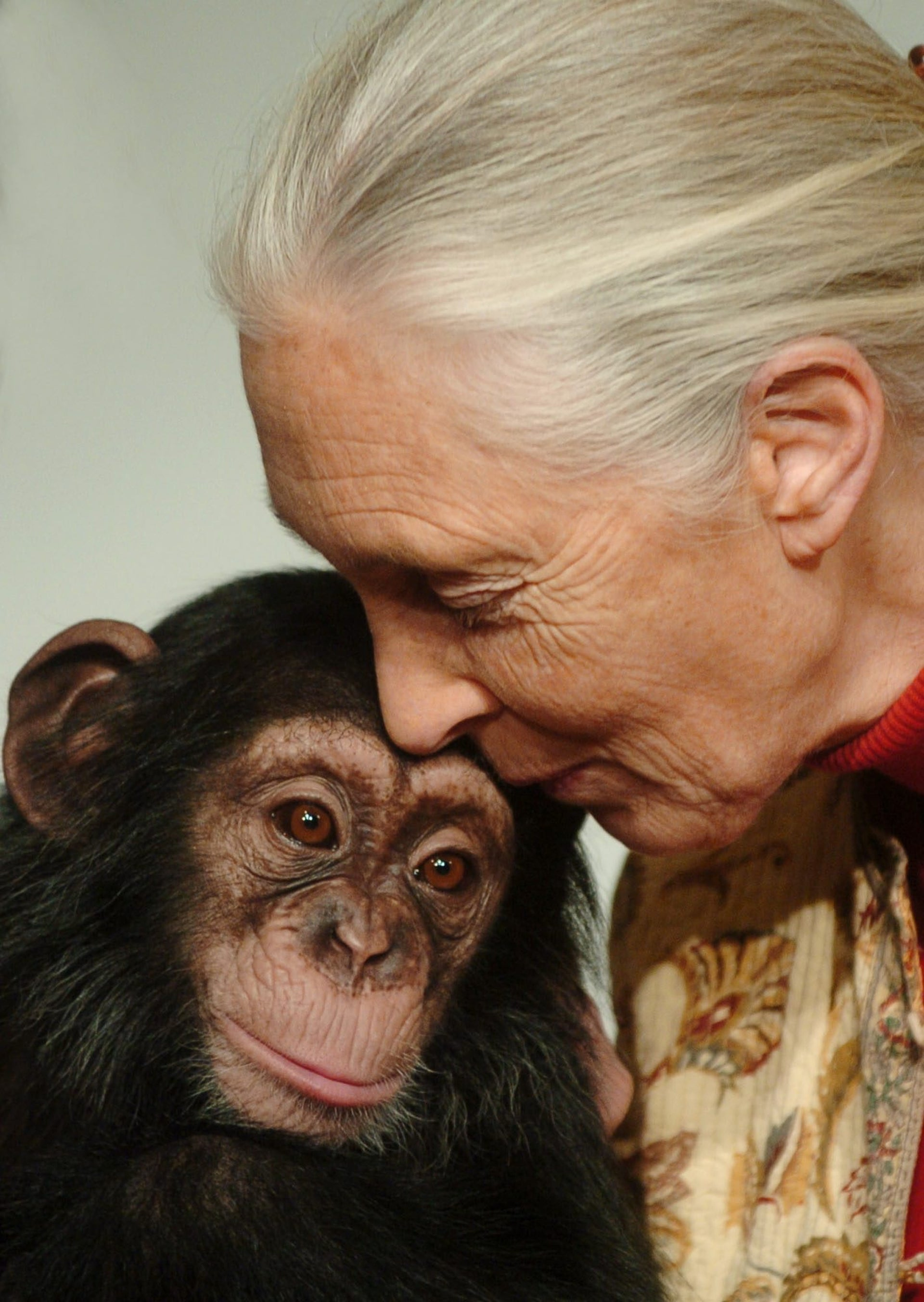 Jane Goodall, British ethologist, kisses Pola, a 14-months-old chimpanzee baby of the Budapest Zoo