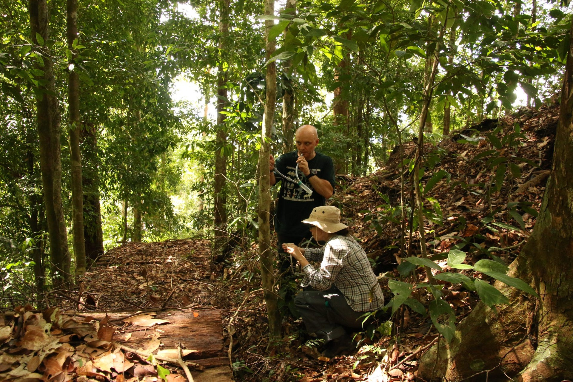Alexey Kopchinskiy and Alice Laciny collecting exploding ants in the Ulu Temburong rainforest, Brunei
