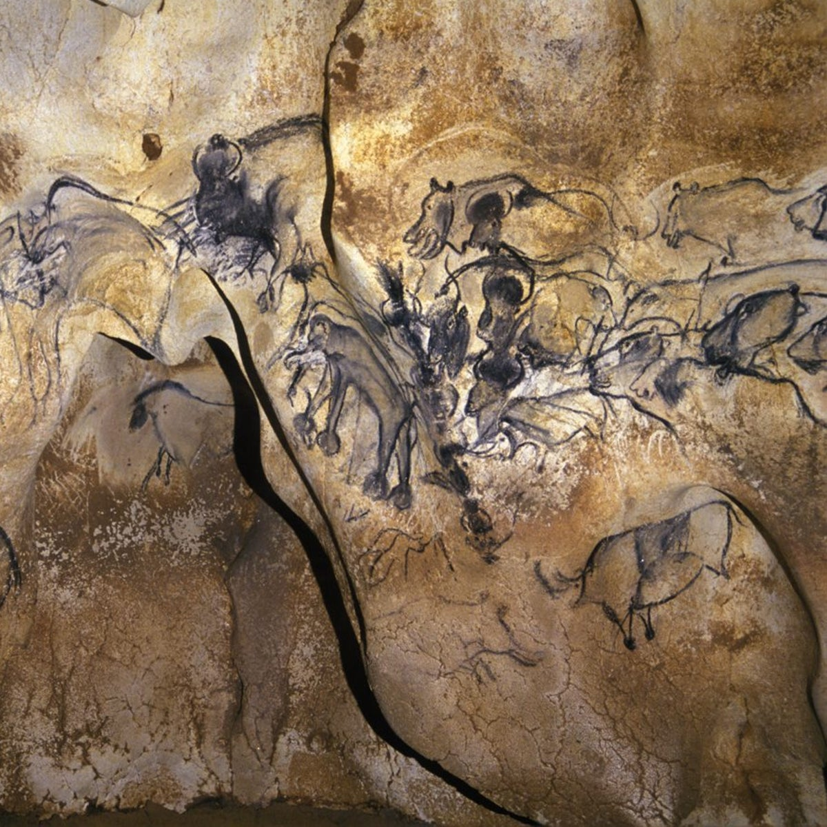 A host of animals drawn in charcoal on the walls of Chauvet Cave in the Ardeche, southern France: Images include rhinos, horses and hippos