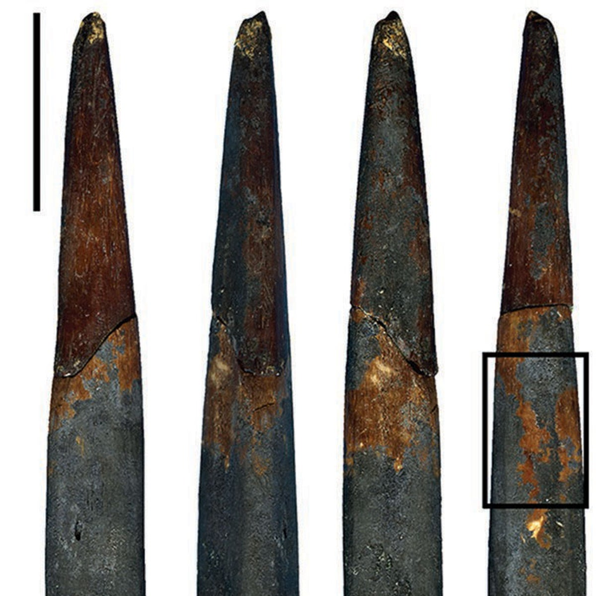 Refitted bone point from Sibudu Cave with a close-up view of the facets produced by a lithic edge. The dark brown surface was probably created by heat. Scale bars = 10mm.