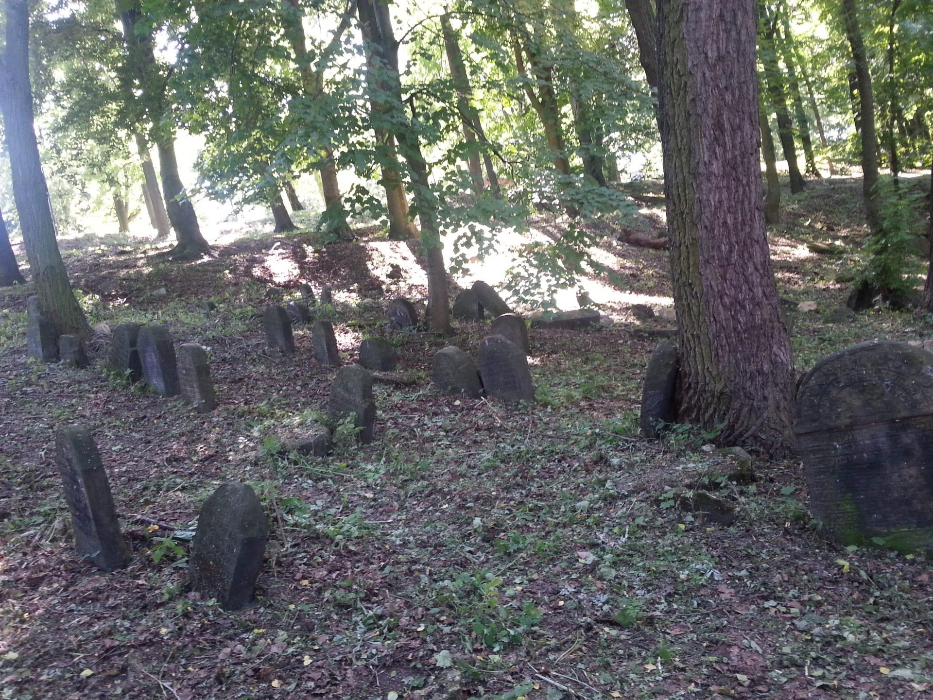 A neglected Jewish cemetery in Poland. Now, 90 non-Jewish volunteers are working on a special project aimed at raising awareness of the country's Jewish history.