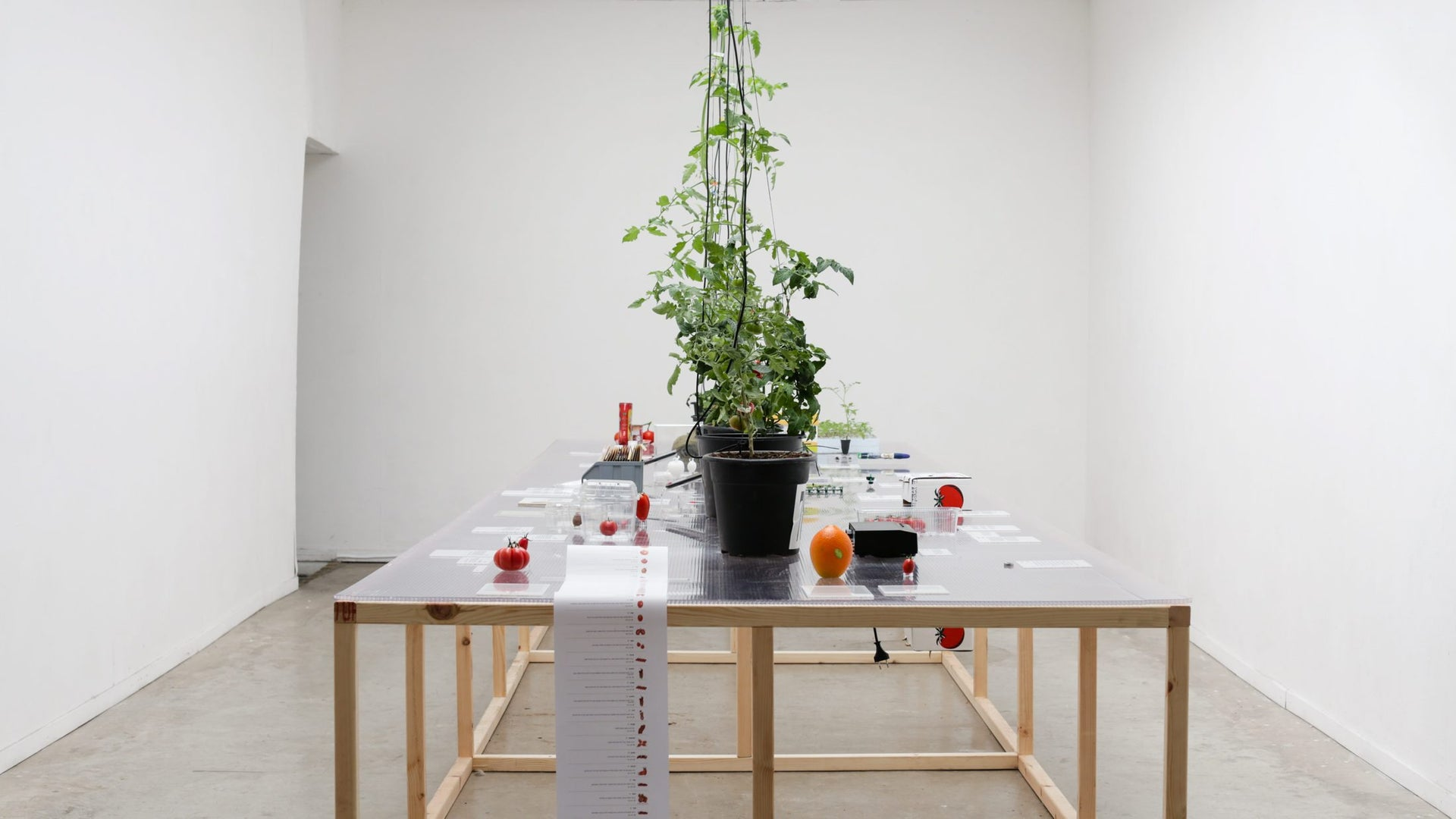 """Cherry tomatoes and tomato products on display as part of """"4 per kilo: Tomato stories."""""""